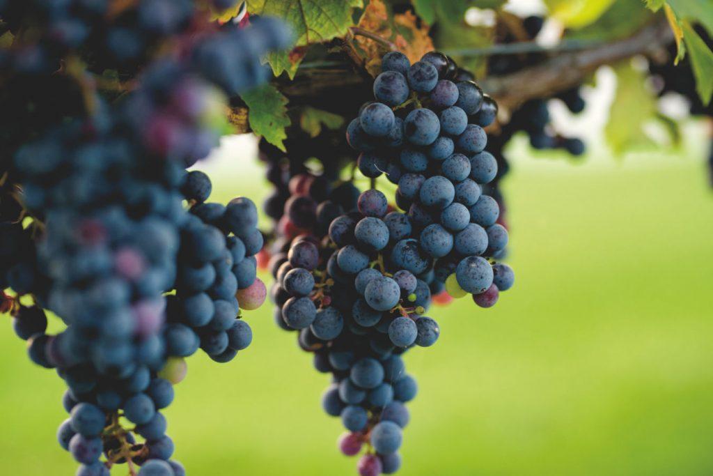 Schatz Winery & Vineyard   Hessenland Inn Zurich Ontario